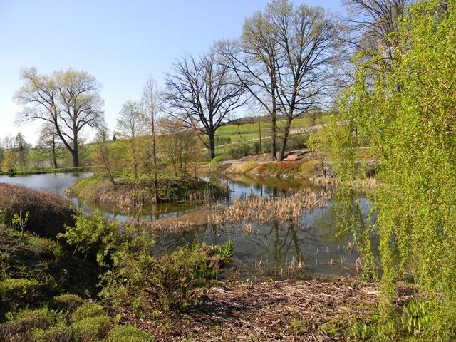 rośliny wodne również można spotkać w Wojsławicach