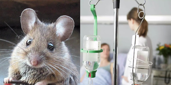 Νοσοκομείο Κέρκυρας: «Ποντικός» ξάφριζε ντουλαπάκια -Αναζητούνται οι συνεργοί του
