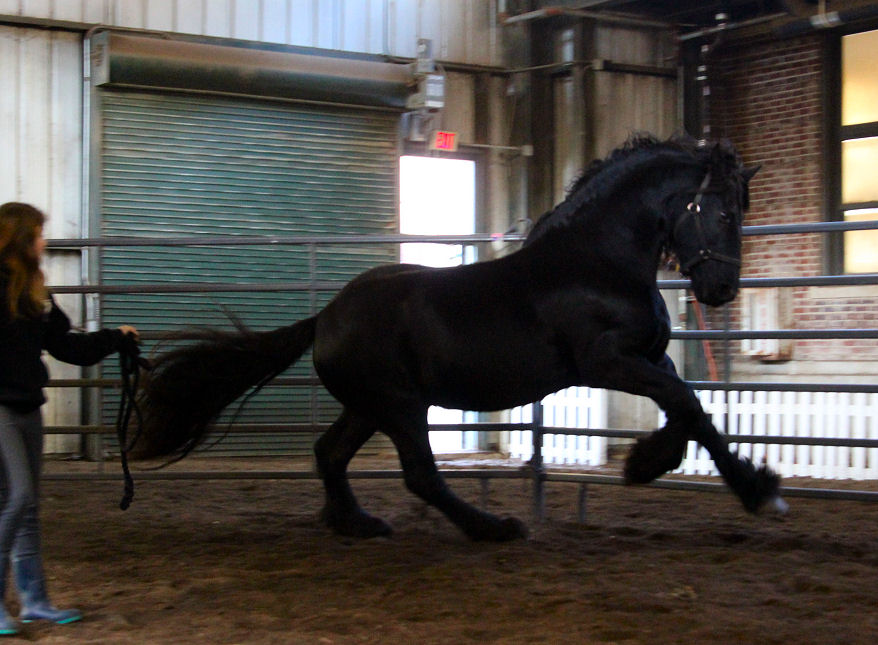 Sugar legacy stables downloads