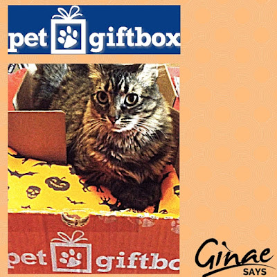 Pet GiftBox: October, 2015