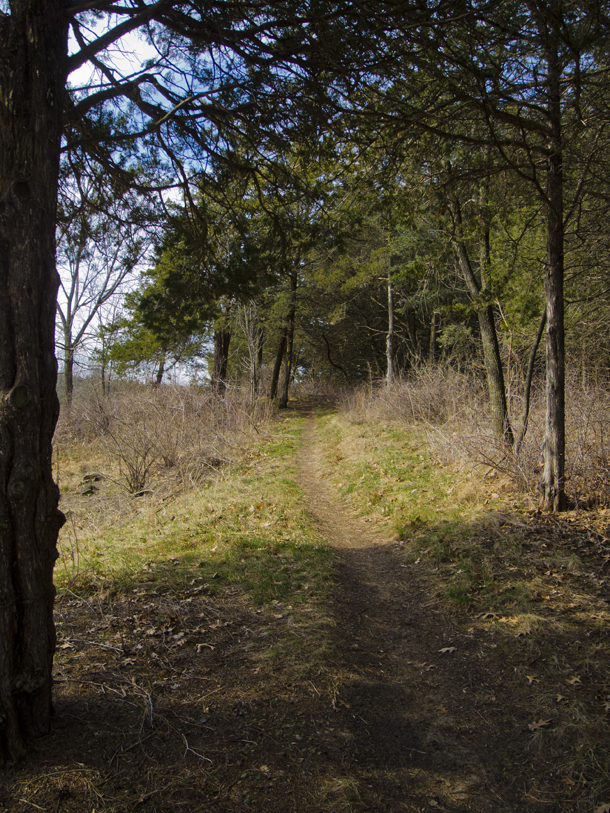 trail cutting along forest edge