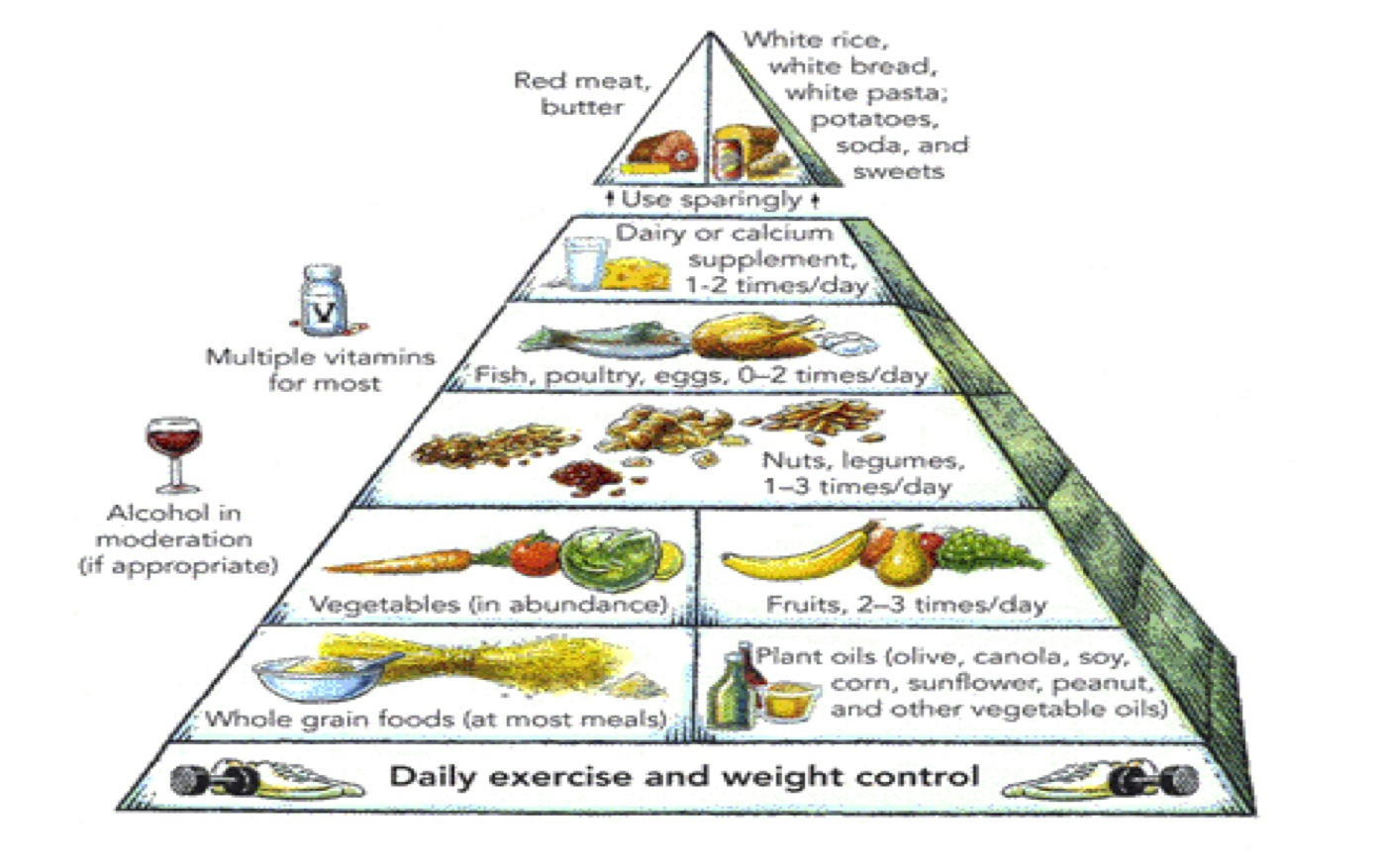The New Food Pyramid Designed In