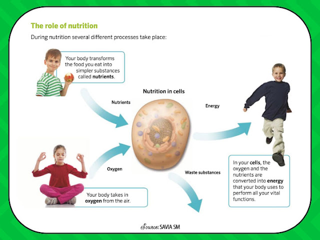 The Role of Nutrition