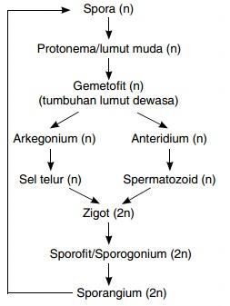 Buatlah Bagan Metagenesis Lumut Daun Mas Dayat