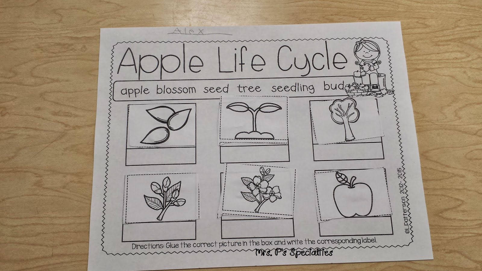 photo of life cycle of an apple worksheet