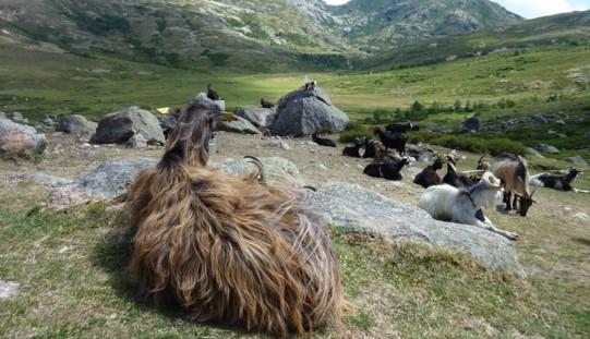 misteri-kematian-kambing-gunungkidul-ulah-jenglot