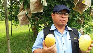 Image result for anim agro mangga