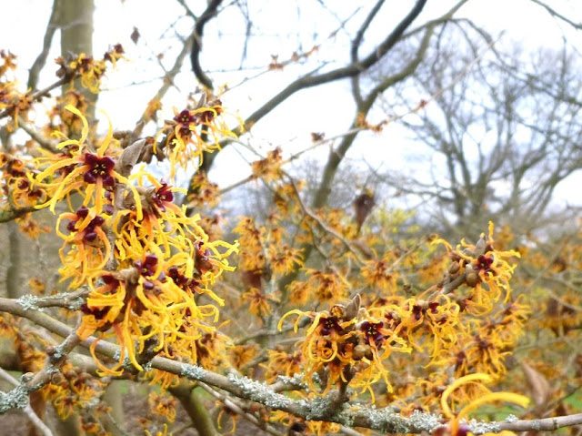 A pop of colour at Kew Gardens in January