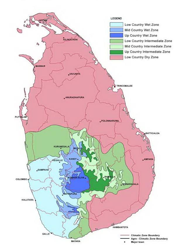 Following The Dreams Plantations In Sri Lanka