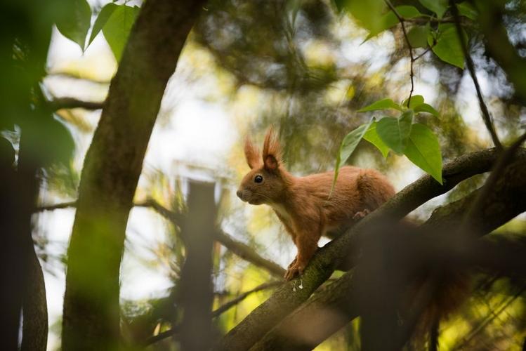 wiewiórka w parku w Łodzi