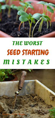 seed starting mistakes