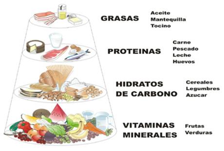 Mitos de la nutrición. : Conceptos básicos de nutrición.