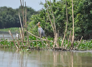 New Wetland Conservation Rules