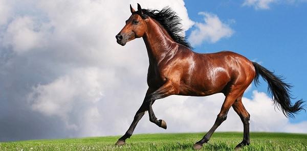 Que significa soñar con caballos