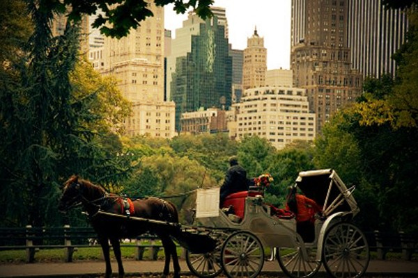 Central Park Tourism Destination In United State of America