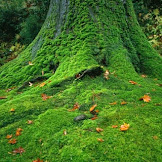Pengertian, Ciri, dan Klasifikasi Tumbuhan Lumut (Bryophyta)