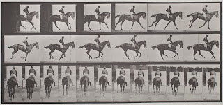 A series of photographs of a horse and rider in motion.
