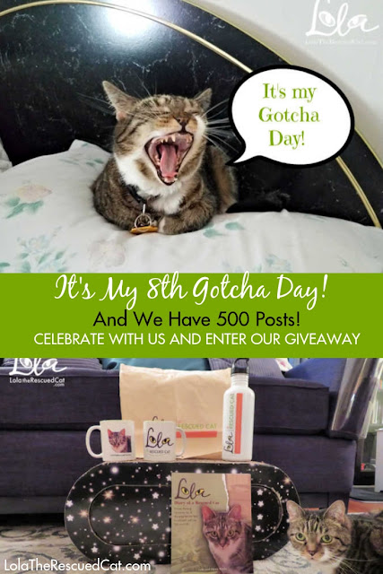 gotcha day|adopt don't shop