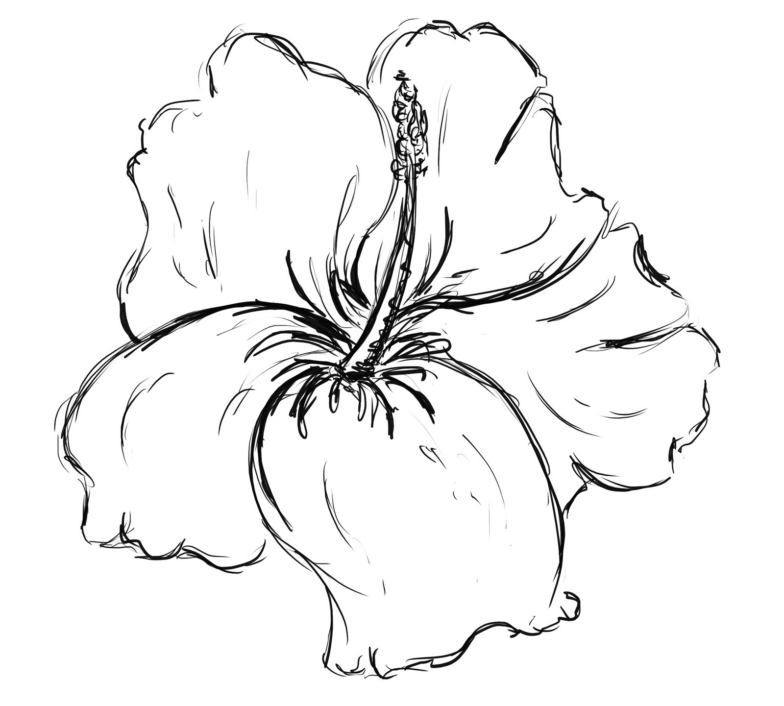 Hibiscus Flower Drawing: Pictures Of Flowers To Draw