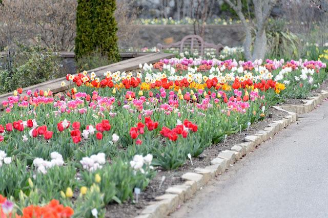 Biltmore Blooms