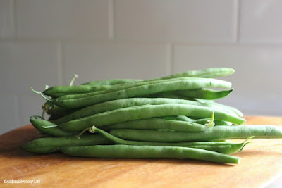 Can Green Beans Upset A Dog S Stomach