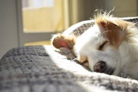 ideias para ganhar dinheiro no verão - hospedagem de pets