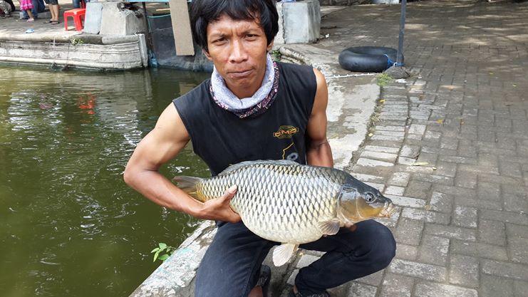 http://ghan-noy.blogspot.com/2017/05/umpan-ikan-mas-tanpa-essen-namun-paling.html