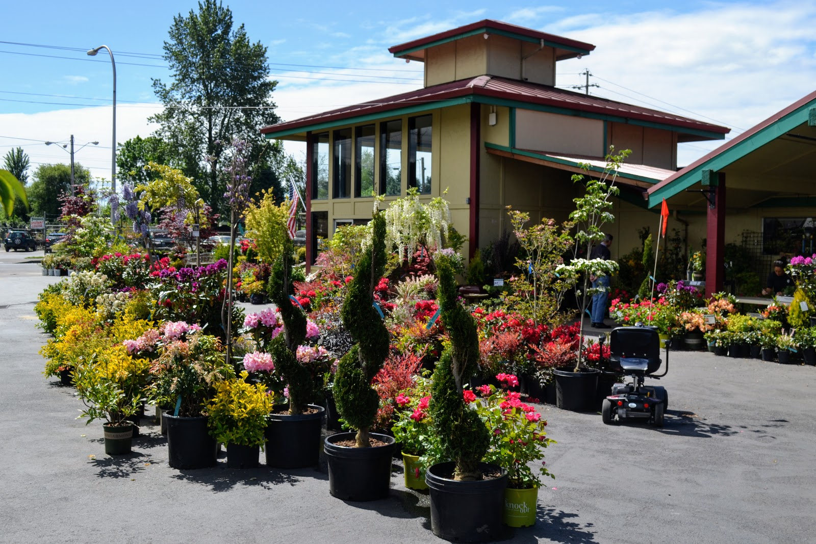 The First Stop On Way Was Tsugawa Nursery In Woodland Washington Very Close To Oregon Border Come With Me And Enjoy Explosion Of Color