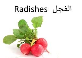 الفجل : Radishes
