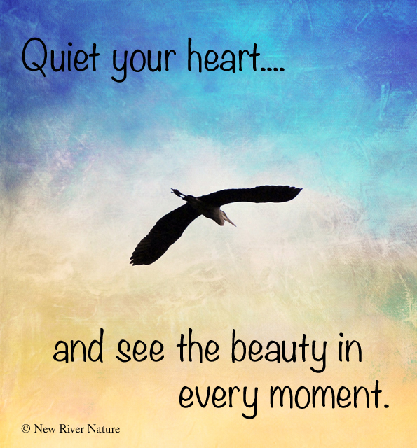 the moment in the quiet little I become quiet and focused on the spirit of god alone with the presence of god, i feel a great serenity i rediscover how refreshing it feels to be calm and at peace.