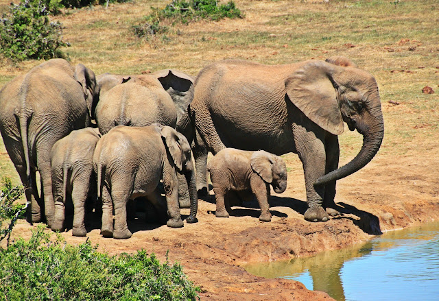 group of baby Elephant and other elephant image