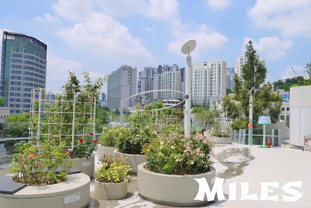【首爾旅遊】首爾路7017@遊首爾最新玩法、市中心空中花園