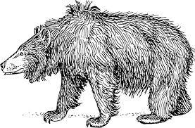 mejores poesias animales el oso