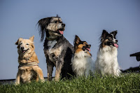 Image: four dogs via Creative Commons