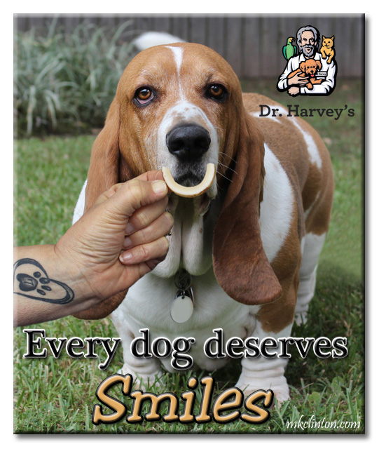 Basset Hound with Dr. Harvey's Coconut Smile in front of his mouth