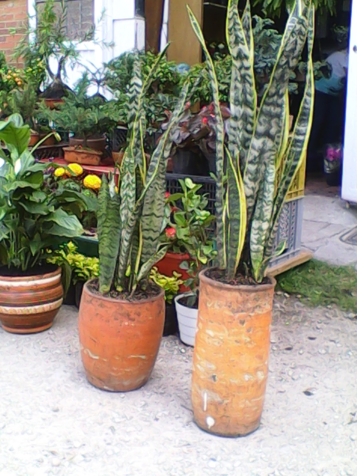 Mi xito vivero mi exito vivero plantas ornamentales for Concepto de plantas ornamentales