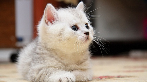 Sweet & Cute Cat Wallpaper