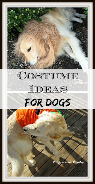 Costume Ideas for Dogs - Inspiration for Halloween!