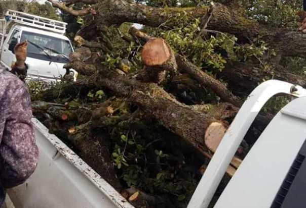 تنظيم ثلاثة ضبوط لمخالفات قطع أشجار سنديان بالسويداء