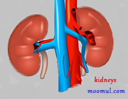 This indicate that your kidneys aren't working properly