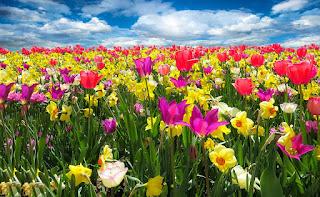 Фото люблю цветы