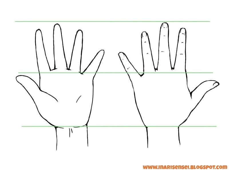 Proportions des mains