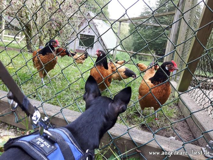 Hühner im Wildpark Eekholt in Großenaspe