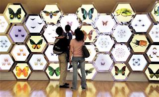 museum satwa serangga kupu kupu museum serangga museum serangga museum serangga museum serangga museum serangga museum serangga