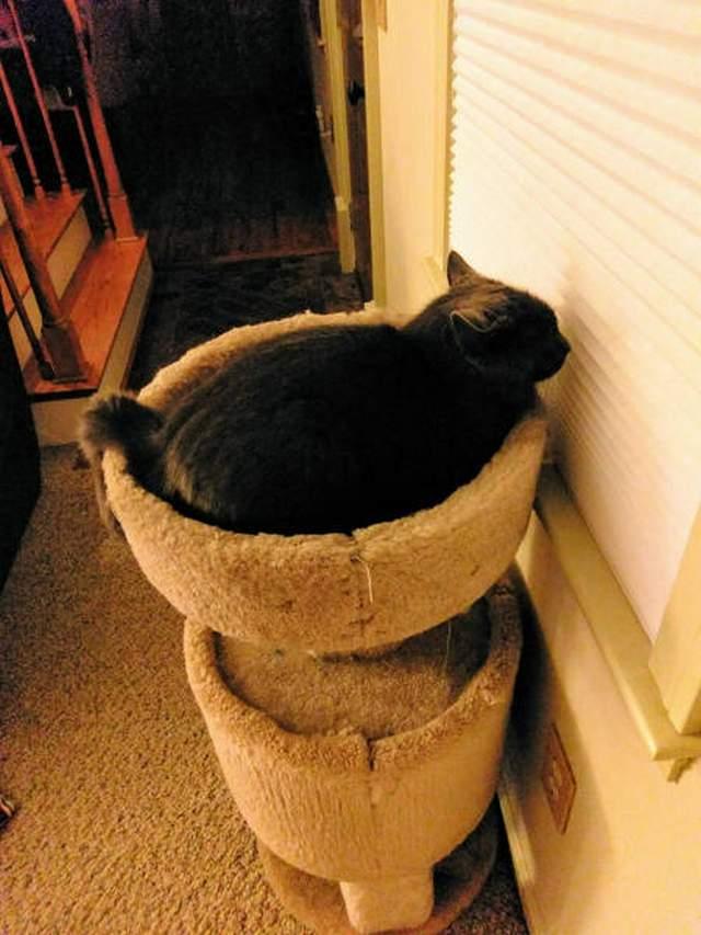 Funny cats - part 241, cute cat pics, best cat images