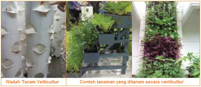Wadah Tanam dan Contoh tanaman yang ditanam secara vertikulur