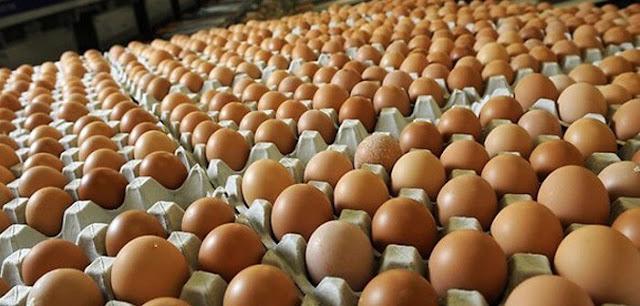 Informasi Telur: Berbagai fakta biadab dibalik industri ini