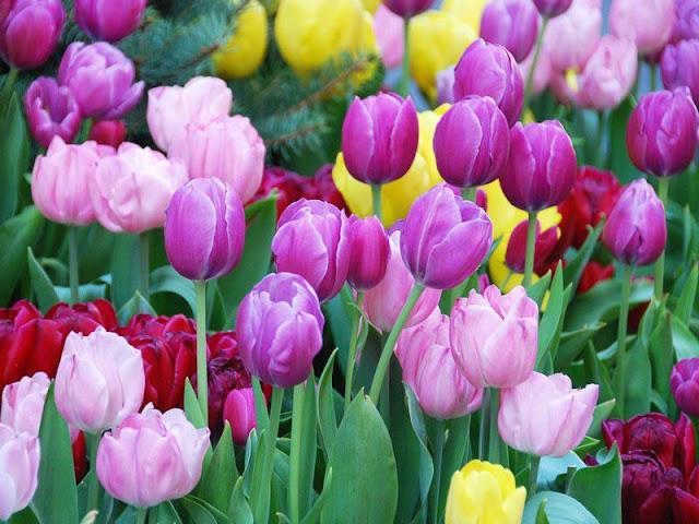 hoa đẹp nhất thế giới 10