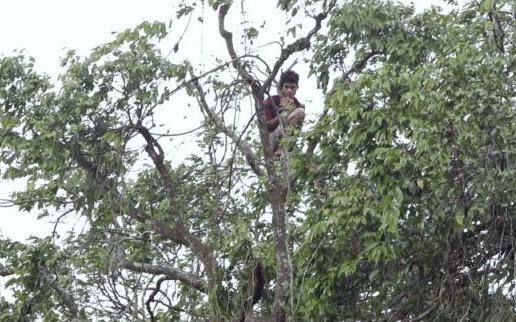2 Hari duduk atas pokok, lelaki digelar Tarzan Kemboja