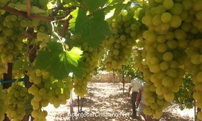 Elaboración de vino bíblico en Israel